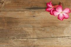 Rosa Blumen auf altem Holz Stockfoto