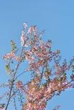Rosa Blumen auf blauem Himmel Lizenzfreies Stockfoto