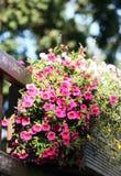 Rosa Blumen auf dem Balkon Lizenzfreies Stockfoto