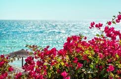 Rosa Blumen auf einem Hintergrund von blauem Meer Lizenzfreies Stockbild