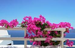 Rosa Blumen auf einem Hintergrund von blauem Meer stockfoto