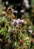 Rosa Blumen auf grünen Stämmen Lizenzfreie Stockfotografie