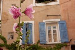 Rosa Blumen auf Rebe vor Wohnung Lizenzfreie Stockfotos