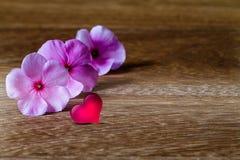Rosa Blumen, die mit rosa Herzen mit weichem Schatten auf Schmutz blühen Stockfotografie