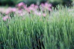 Rosa Blumen in einem üppigen grünen Frühlingsgras Stockfoto