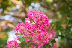 Rosa Blumen für Hintergrund Lizenzfreie Stockfotografie