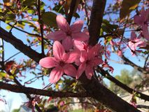Rosa Blumen-Frühjahr Stockfotografie
