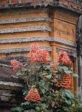 Rosa Blumen gegen eine natürliche Backsteinmauer stockfotografie