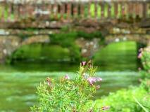 Rosa Blumen gegen eine Ziegelsteinbrücke Stockbild