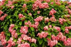 Rosa Blumen-Hintergrund Lizenzfreies Stockbild