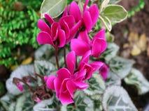 Rosa Blumen im Blut lizenzfreie stockbilder