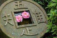 Rosa Blumen im Münzenpool der runden Form am grünen Garten stockbilder