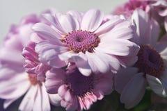 Rosa-Blumen im Sommer Lizenzfreie Stockbilder