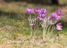 Rosa Blumen im Wald Lizenzfreie Stockbilder