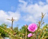 Rosa Blumen mit dem blauen Himmel Lizenzfreies Stockbild