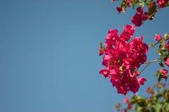 Rosa Blumen mit einem hellen Hintergrund des blauen Himmels Stockfotos