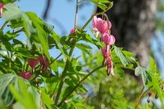 Rosa Blumen mit grünen Blättern lizenzfreies stockfoto