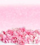 Rosa Blumen mit Tautropfen auf Unschärfehintergrund Stockfotos