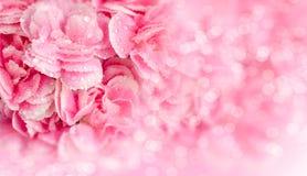 Rosa Blumen mit Tautropfen auf Unschärfehintergrund Lizenzfreies Stockfoto