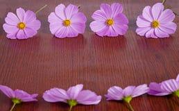 Rosa Blumen-Rahmen Lizenzfreies Stockbild