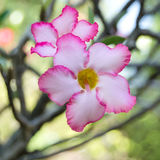 Rosa Blumen schließen oben Lizenzfreies Stockbild