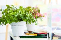 Rosa Blumen sind in den weißen Vasen und in den grünen Töpfen Mit einer Schüssel von f stockbild