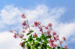 Rosa Blumen und Niederlassung in Tage des blauen Himmels des Naturhintergrundes Stockbilder