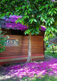 Rosa Blumenblätter von tropischen Blumen Stockfotos