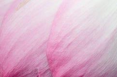 Rosa Blumenblattabschluß oben lizenzfreie stockbilder