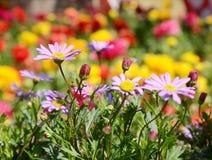 Rosa Blumenfrühling des Sonnenscheins Lizenzfreies Stockbild