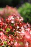 Rosa Blumengruppe Stockfotografie