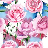Rosa-Blumenmuster des rosa Tees des Wildflower in einer Aquarellart Lizenzfreies Stockbild