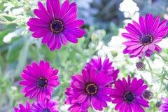 Rosa Blumensträuße Stockfotos