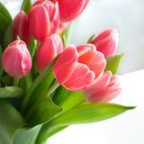 Rosa, Blumenstrauß der roten Rosen mit Wei?er Hintergrund lizenzfreie stockbilder