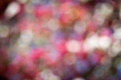Rosa bokehbakgrund Fotografering för Bildbyråer