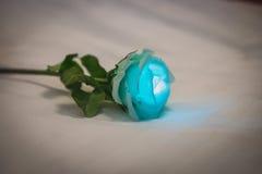 Rosa bonita Imagem de Stock