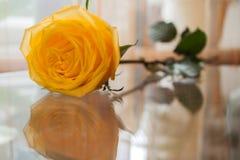 A rosa bonita do amarelo é refletida na tabela de vidro transparente fotografia de stock royalty free