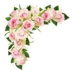 A rosa bonita do branco floresce e as folhas em uma composição de canto Imagens de Stock