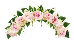 A rosa bonita do branco floresce e as folhas na composição do arco Imagens de Stock