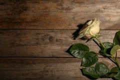 Rosa bonita do branco no fundo de madeira, vista superior imagens de stock