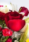 Rosa bonita do vermelho com gotas da água. Fotos de Stock Royalty Free