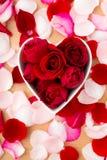 Rosa bonita do vermelho dentro da bacia da forma do coração com pétala ao lado Fotografia de Stock Royalty Free
