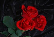 Rosa bonita do vermelho no cetim preto Fotografia de Stock Royalty Free