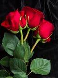 Rosa bonita do vermelho no cetim preto Imagens de Stock Royalty Free