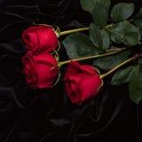 Rosa bonita do vermelho no cetim preto Fotos de Stock
