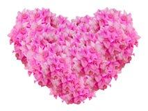 Rosa Bouginvillea-Blumen-Herzform lokalisiert auf weißem Hintergrund Lizenzfreie Stockfotos