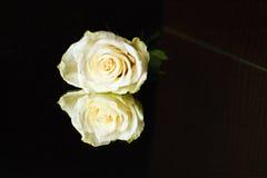 Rosa branca com reflexão em um fundo de Wenge Fotografia de Stock Royalty Free