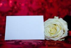 Rosa branca com um risco claro para o texto Copie o espaço para o texto Molde para o 8 de março, dia do ` s da mãe, dia do ` s do Fotografia de Stock