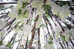 Rosa branca em Coreia Everland Fotografia de Stock Royalty Free
