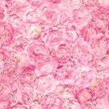 Rosa brilhante sem emenda Rose Buds Pattern imagens de stock